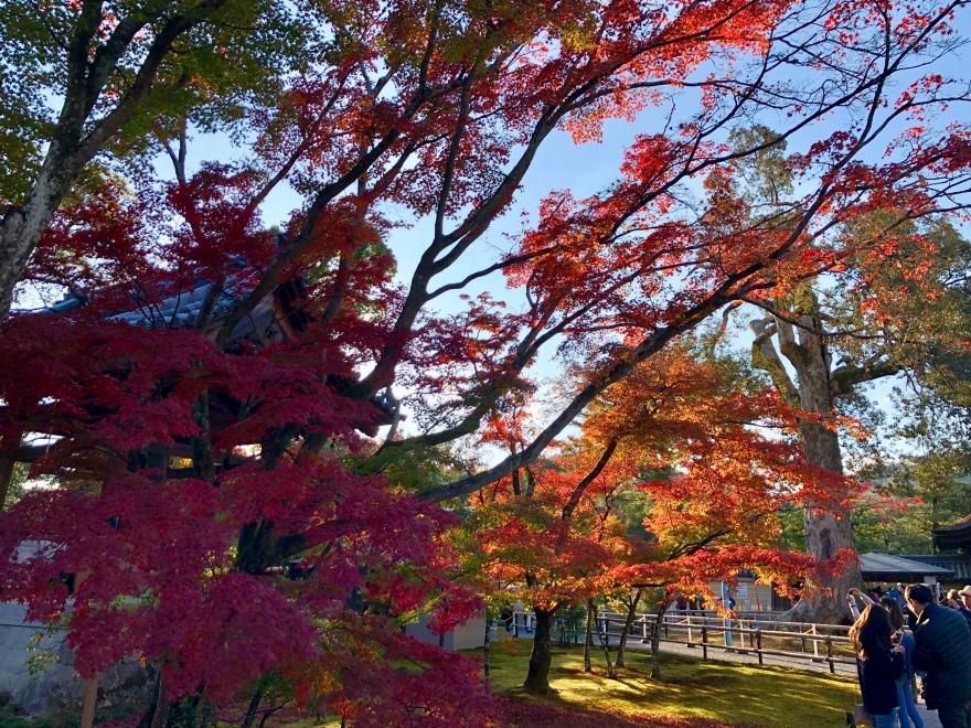 The autumn foliage @ Kinkakuji