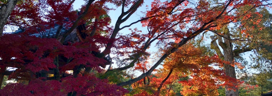 The autumn foliage @ Kinkakuji