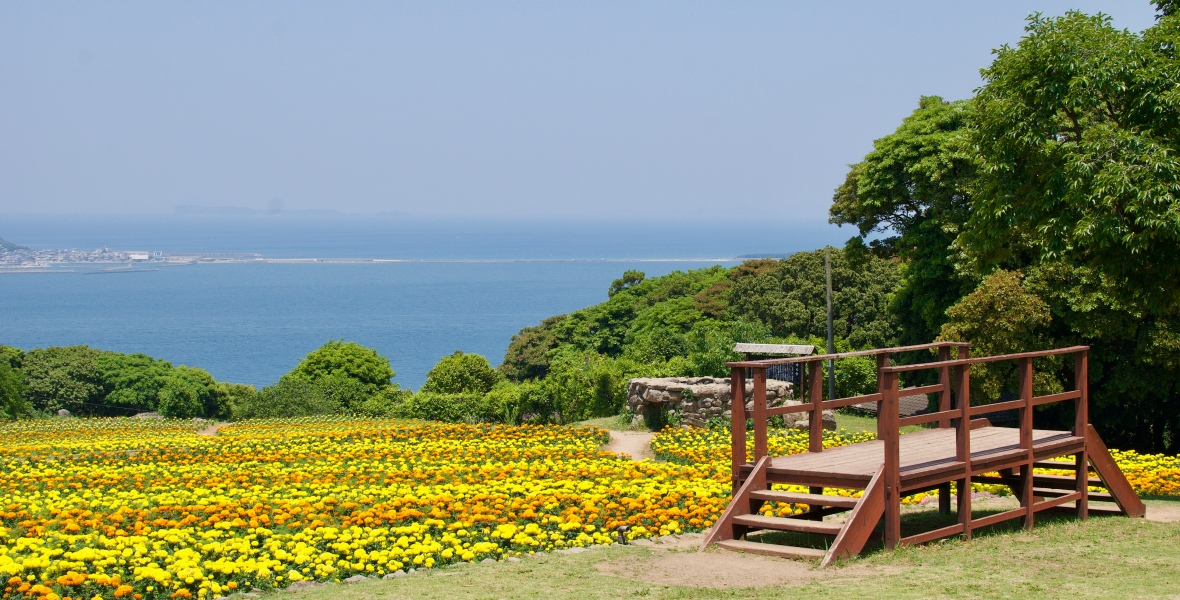 Flower field @ Nokonoshima Island Park